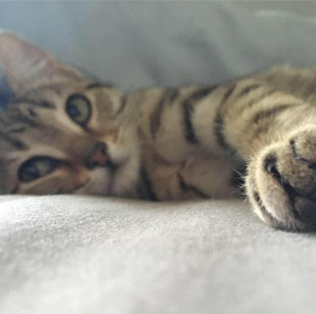 Trin paws